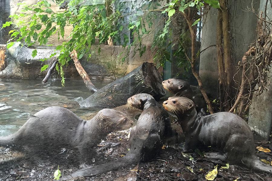 escort i Aalborg herning zoo