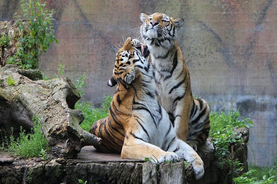 priser aalborg zoo